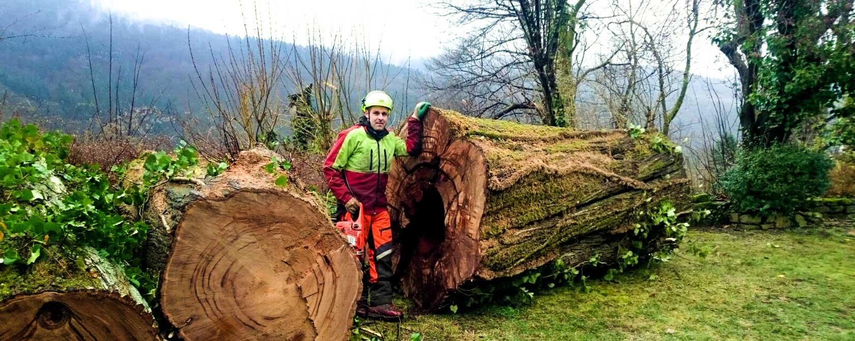 DANIELS Baumpflege Gartenservice