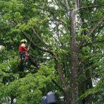 Experten-Interview zur Baumpflege